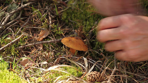 Mushroom Stock Video Footage