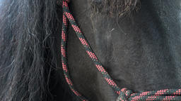 Horse detail,fur and mane. Detail of a horse head with flying mane Live Action