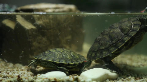 Turtle Live Action