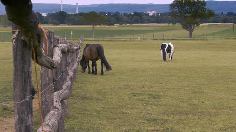 Two horses eating grass near the fence Footage