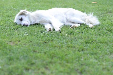 Dog Fotografía