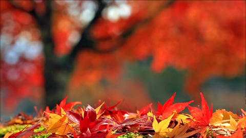 Blurred colorful autumn background Image