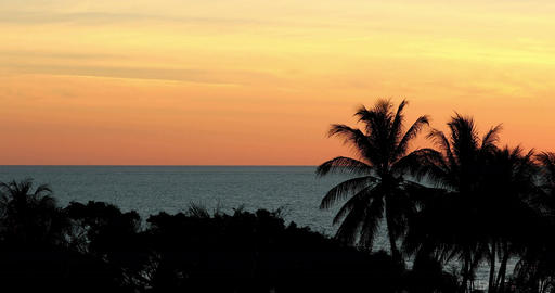 Beautiful tropical orange sunset with sea and palm trees Acción en vivo