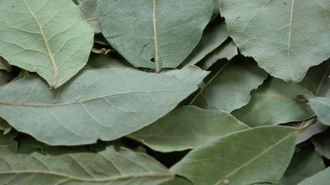 Rotating dry laurel leaves spice background Live Action