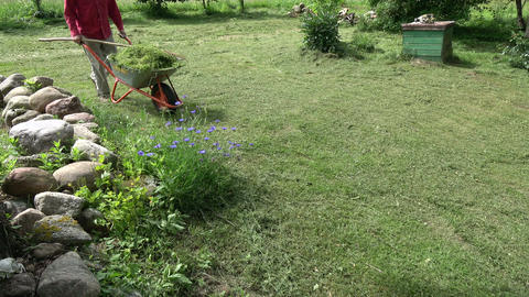 Gardener transporting cut grass with wheelbarrow Footage