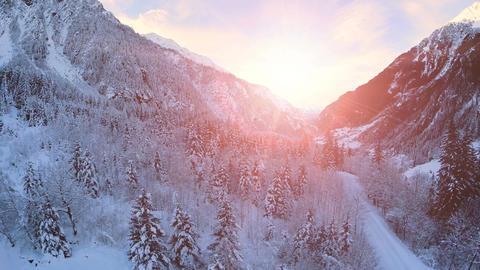 Snow winter landscape sunset dusk forest woods trees Live Action