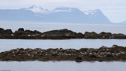 Seals On The Shore stock footage
