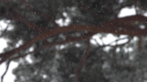 Heavy snow falling on a forest trail 11 Footage