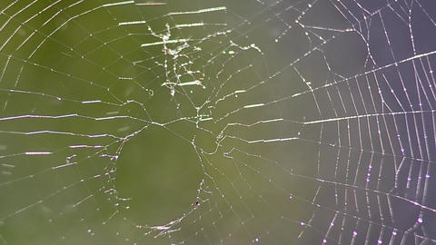 In the garden spider web Spray water over it Spray water on cobweb 1 Live Action
