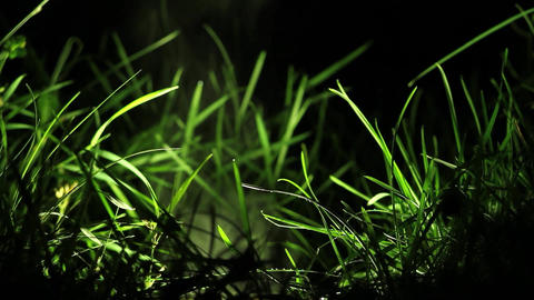 On A Cold Night After A Rain, Drops Of Water Fell On A Fixed Reflector In Grass, stock footage