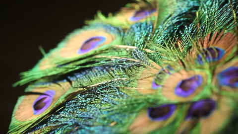 Peacock feather Footage