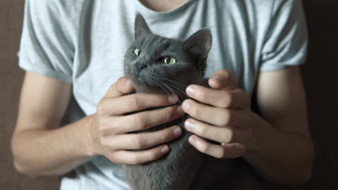 Man caressing his cat Footage