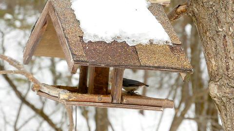 Birds feeder in the park Footage