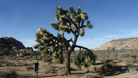 Joshua tree national park, Pan time lapse of a tree, in Joshua tree national Footage