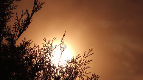 Sun in the sky, a yellow ball glowing. The sky is red. Herbs are moving in the w Footage
