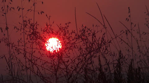Sun in the sky, a yellow ball glowing. The sky is red. Herbs are moving in the w Live Action