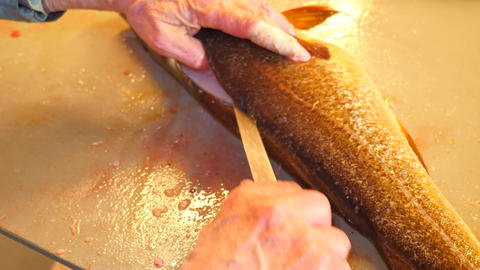 Hands of worker gutting cod, the codfish. A man wearing rubber working clothes i Live Action
