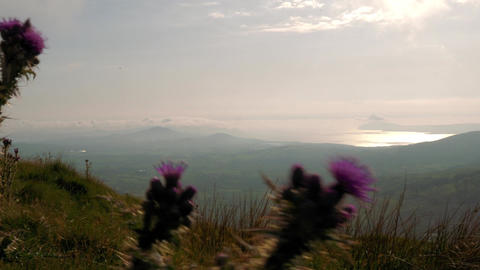Irish Landscapes Through Moving Thistles, Country Cork, Ireland Footage
