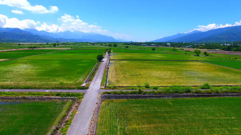 Aerial view of road and rice farm Live影片