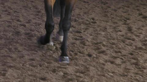 Horse Bay Legs Close Up Image