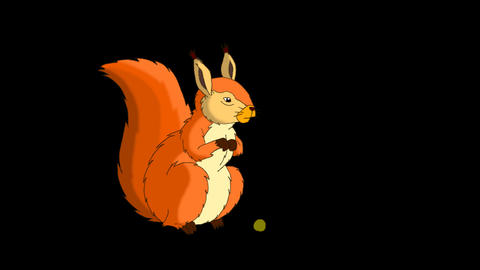 Rufous Squirrel Sitting and Eating Nuts. Alpha Animation