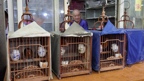 Birds Animals Pets In Asian Market Shanghai China Asia Live Action