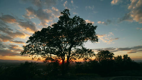 Cinematic sunset time-lapse with tree in foreground Footage