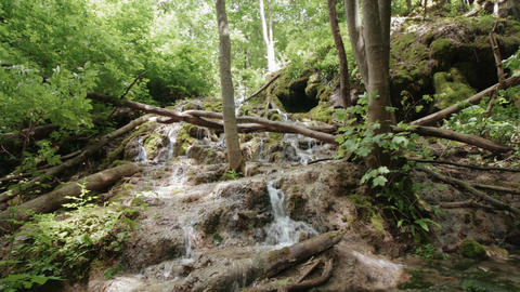 Streams of water in the woods Footage