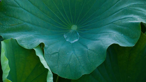 Lotus #003 Footage
