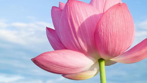 Lotus #012 Footage