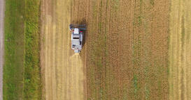 Aerial view Combine Harvester gathers the wheat at sunset Footage