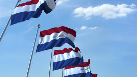 Row of waving flags of the Netherlands agaist blue sky, seamless loop Footage