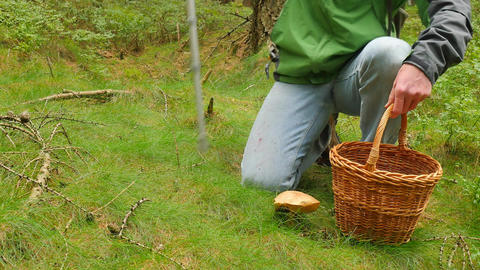Man with medicine crutch found mushroom in forest grass. Man in blue jeans, Filmmaterial