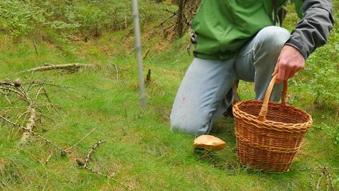 Man with medicine crutch found mushroom in forest grass. Man in blue jeans, Archivo