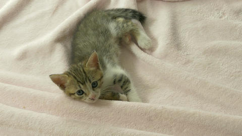 Striped kitten on blanket Footage