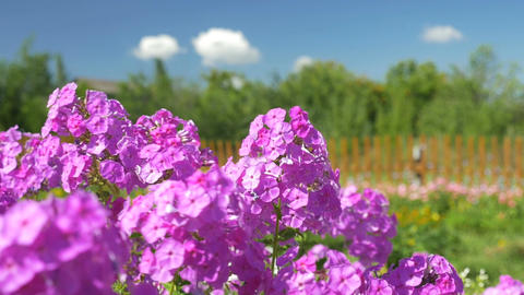Beautiful flowers swaying in the wind Footage