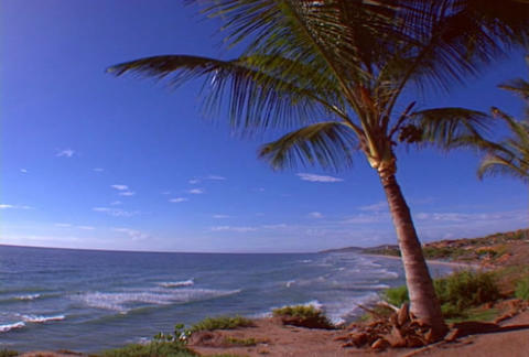 Beach with palmtree Footage
