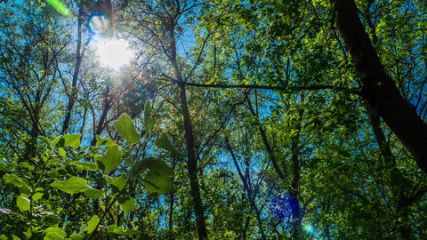 timelapse the sun shines through the leaves of the trees in the forest green Footage