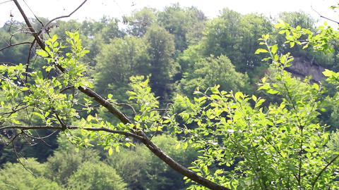Leafy tree branches in the wind. Green leaves on branches... Stock Video Footage