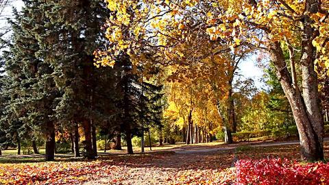 Footpath Autumn Landscape stock footage
