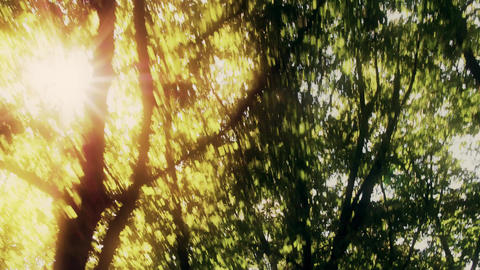 Sun shining though tree leaves in summer Footage
