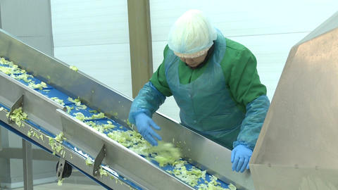 Camera Shows Woman Worker Sorting Fresh Salad Footage