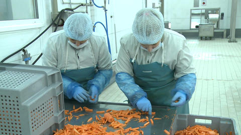 Camera Shows Skilled Women Sorting Cut Carrots on Metal Table Footage