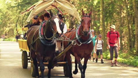 ZAKOPANE, POLAND - JUNE 24, 2017. Steadicam shot of tourist horse-drawn wagon in Footage