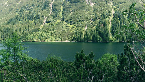 Forest shores of the mountainous lake Morskie Oko in the Tatra mountains Footage
