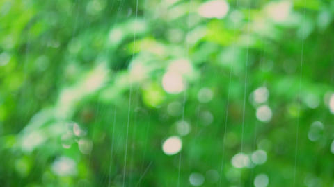 Warm summer rain against blurred trees bokeh background Footage
