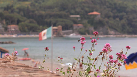 Italian beach resort view with the flag, flowers, and bee on it Footage