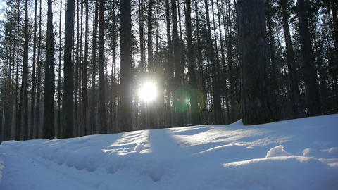 Sunrise in the winter forest Footage