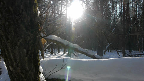 Fallen logs in winter forest at sunrise Footage
