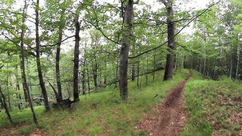 Walk through the green forest early summer on a meandering path 10 Footage